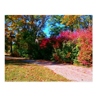 Vibrant Fall Day Postcard