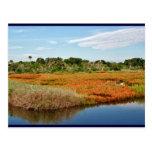 Vibrant Fall Marsh, Florida Post Card
