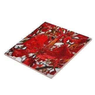 Vibrant Flamboyant Flower on Ceramic Tile