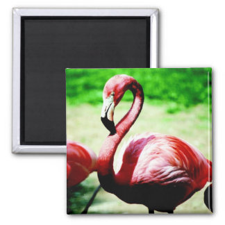 Vibrant Flamingo Magnet