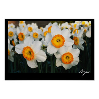 vibrant floral photo poster