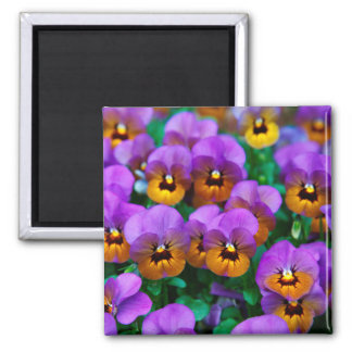 Vibrant Florals by Joyful Summer Magnet