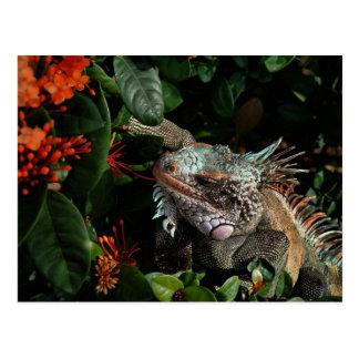 Vibrant Iguana Post Card, US Virgin Islands Postcard