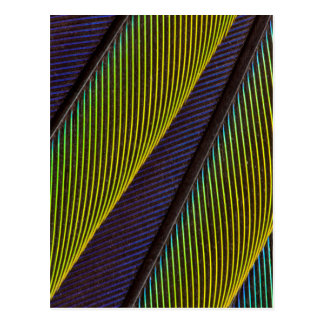 Vibrant Jenday Conure Feather Abstract Postcard