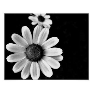 vibrant macro black and white photography floral poster