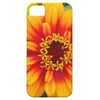 Vibrant Orange Dahlia Bloom Close Up iPhone 5 Cover