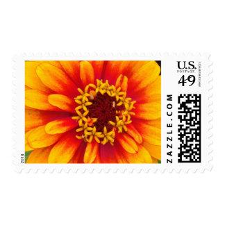Vibrant Orange Dahlia Bloom Close Up Postage Stamp