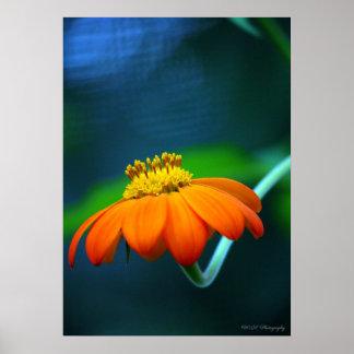 Vibrant Orange Flower Color Photo Poster