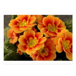 VIBRANT ORANGE FLOWERS POSTCARD