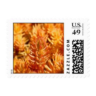 Vibrant Orange Succulents Autumn Plant Leaves Postage Stamp