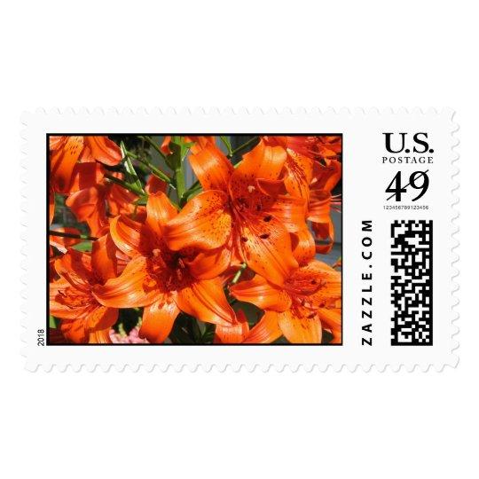 Vibrant Orange Tiger Lilies Postage