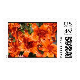 Vibrant Orange Tiger Lilies Postage Stamp
