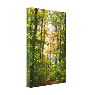 Vibrant Path In The Forest Canvas Print
