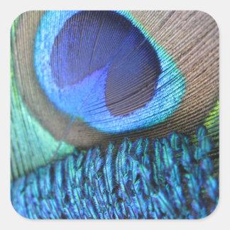 Vibrant Peacock Feather square sticker