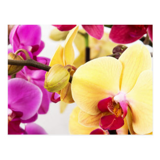 Vibrant Pink and White Orchid Flowers Postcard