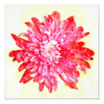 "Vibrant pink chrysanthemum flower 5.25"" square invitation card"