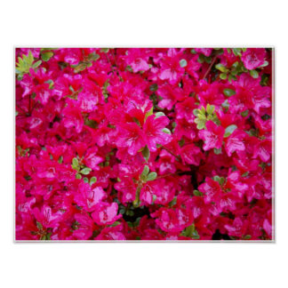 Vibrant Pink Flowers Poster