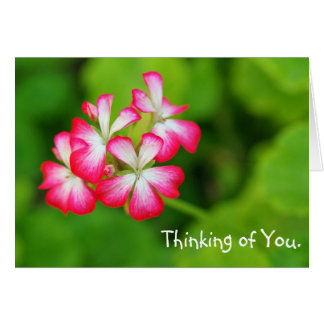 Vibrant Pink Geraniums   Greeting Card