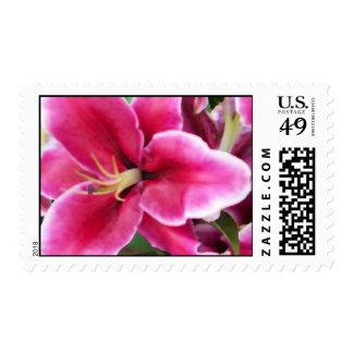 Vibrant Pink Lily Stamp