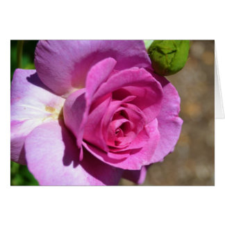 Vibrant Pink Rose Card