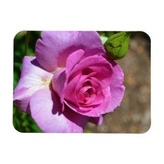 Vibrant Pink Rose Magnet