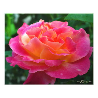 Vibrant Pink Rose Photography by Karrilee Photo Print