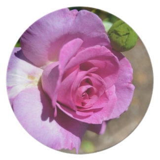 Vibrant Pink Rose Plate