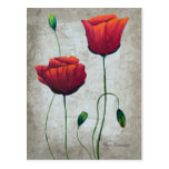 Vibrant Poppies 1 Postcard
