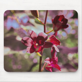 Vibrant Purple Orchids in the Sun Photo Mouse Pad