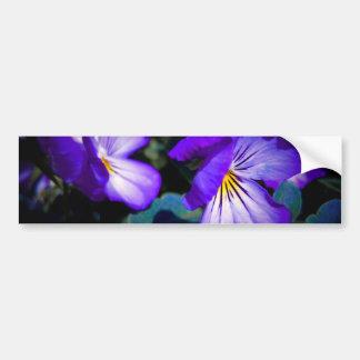 Vibrant Purple Pansy Bumper Sticker