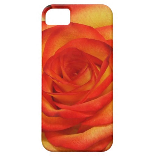 Vibrant Red and Peach Rose Macro Photo iPhone 5 Cases