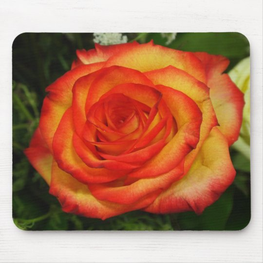 Vibrant Red and Peach Rose Macro Photo Mouse Pad
