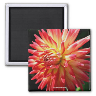 Vibrant Red Dahlia Flower Photography Magnet