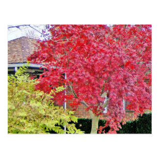 Vibrant Red Fall Tree Postcards
