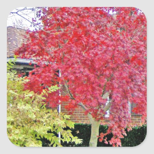 Vibrant Red Fall Tree Stickers