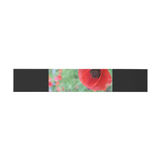 Vibrant Red Poppy belly band