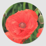 vibrant red poppy round stickers