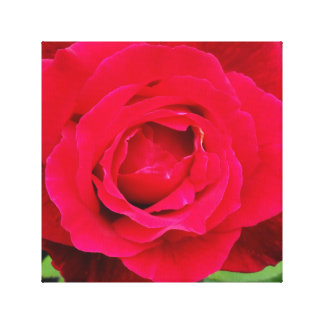 Vibrant Red Rose Wrapped Canvas