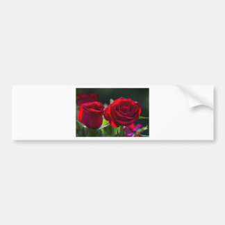 Vibrant Romantic Red Roses Bumper Sticker