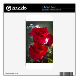 Vibrant Romantic Red Roses iPhone 4 Skin