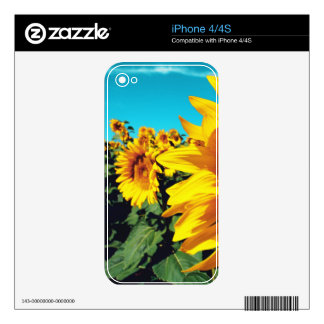 Vibrant Sunflowers against blue sky iPhone 4 Decal