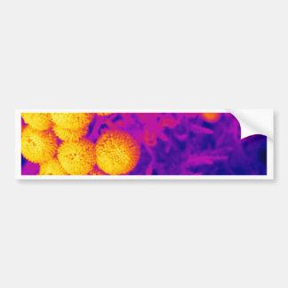 Vibrant Tansy Bumper Sticker