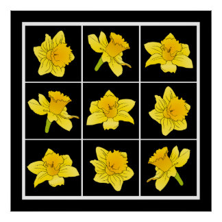 Vibrant Yellow Daffodil Flowers on Black Poster