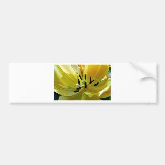 Vibrant Yellow Day Lily Car Bumper Sticker