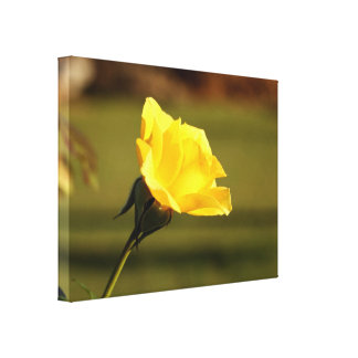 Vibrant Yellow Rose: Closeup Side View Stretched Canvas Prints