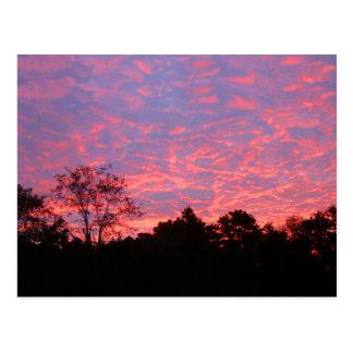 Vibrantly Pink Sunrise Postcard