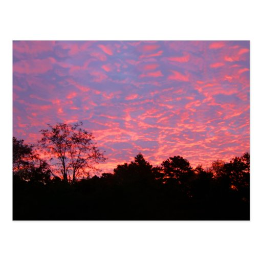 Vibrantly Pink Sunrise Postcards