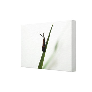 Vibrations Canvas Print