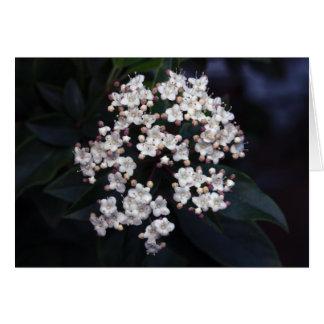 viburnum tinus card