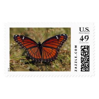 Viceroy 12/11 stamp